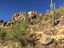 desertmountain